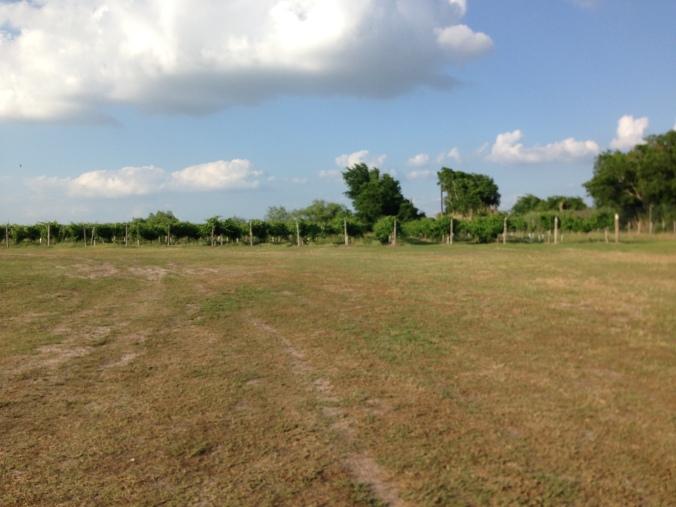 Messina Hoff Vineyards
